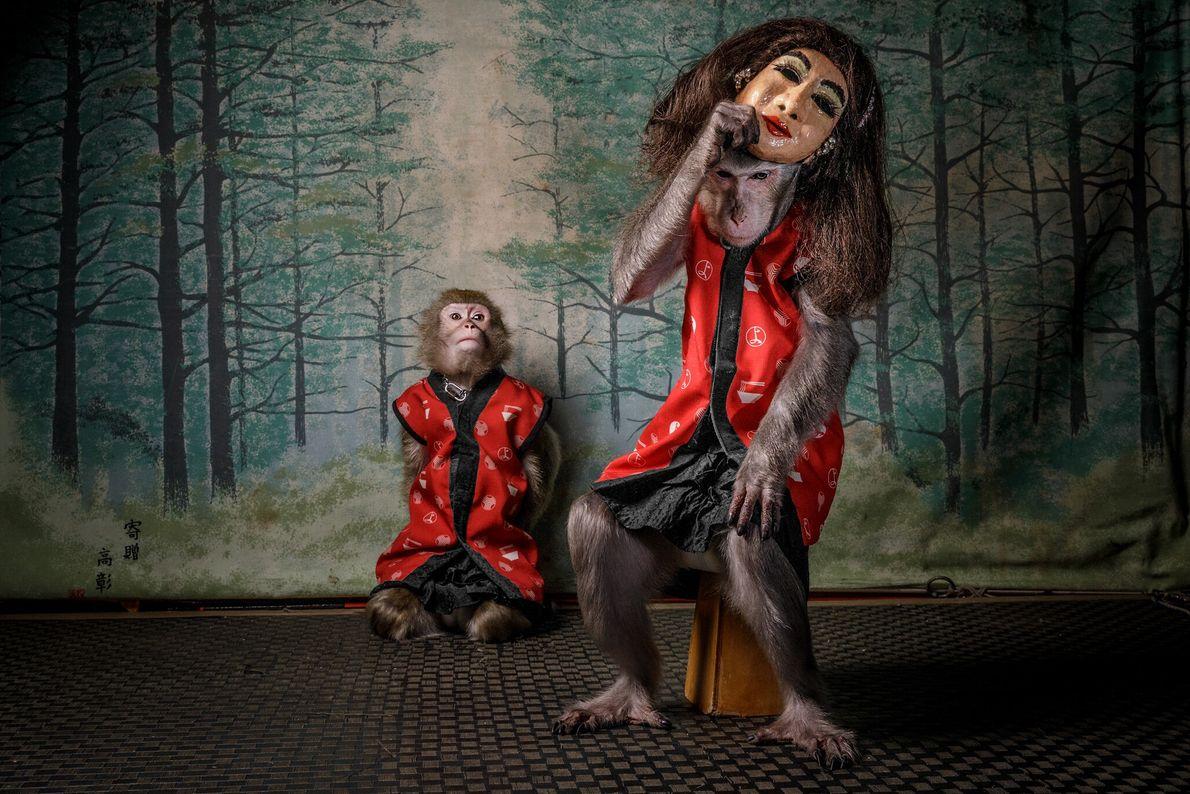 After patrons in Kayabuki Tavern, in Utsonomiya, Japan, have finished eating, the owners' pet monkeys climb ...