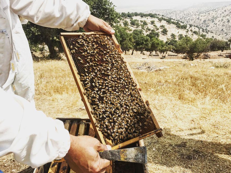 Work alongside Yousef Sayyah, a beekeeper in Um Qais, for a unique experience that teaches teamwork, ...