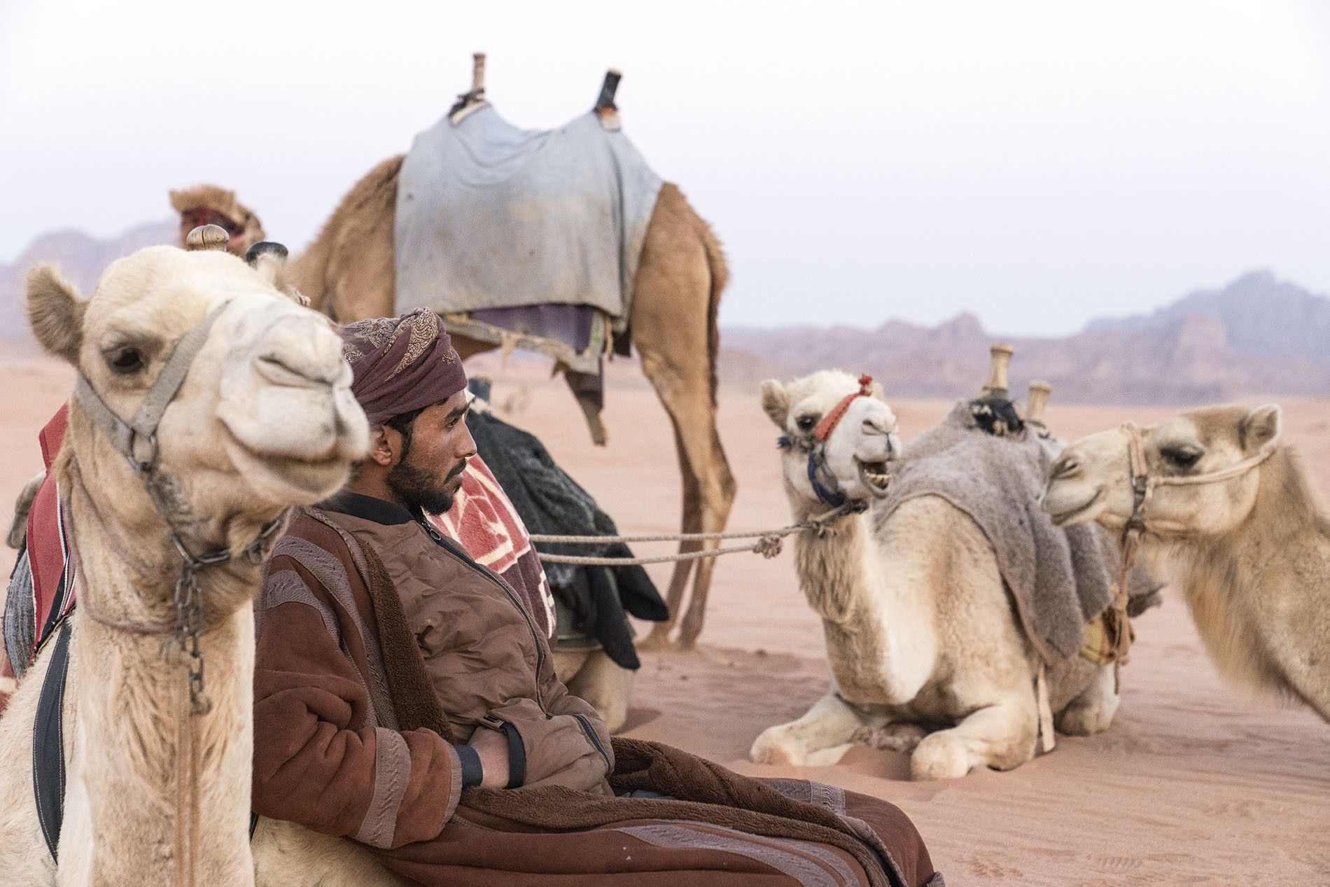 Resting with the camels.