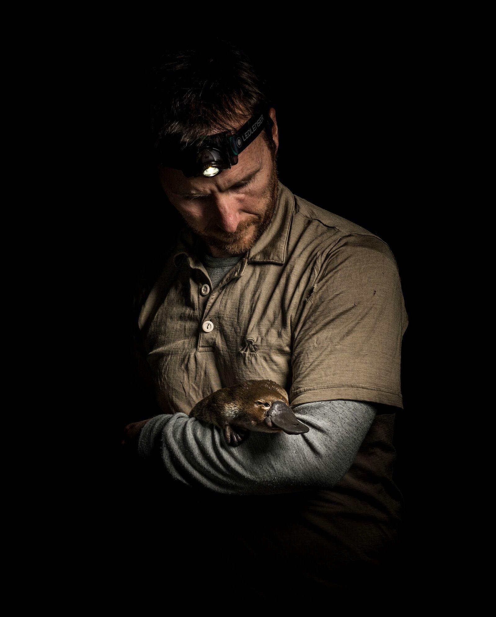 Platypus researcher and ecologist Josh Griffiths cradles a female platypus he just captured. Researchers are lobbying ...