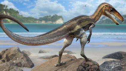 This small dinosaur had a marvellous sense of touch, detailed fossils reveal
