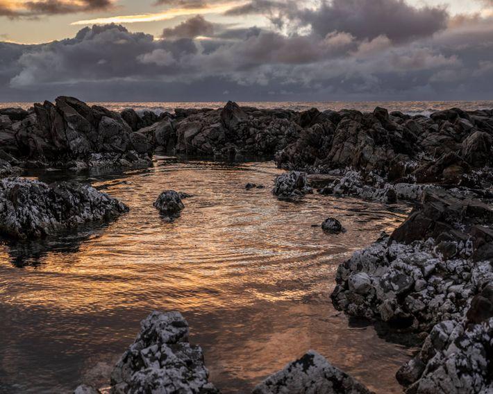 Kaikōura, a coastal town on New Zealand's South Island, is known for its abundant marine wildlife ...