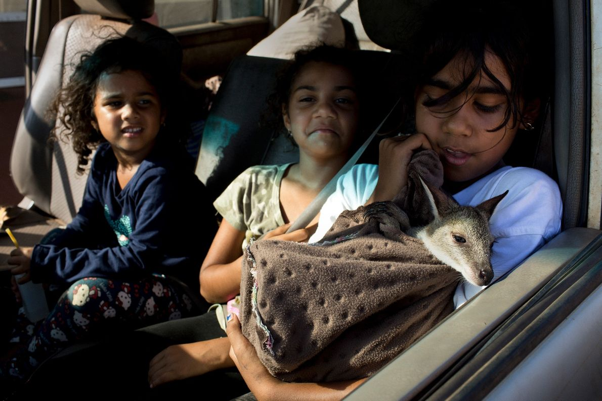 Young Tiwi girls hold a baby wallaby in the front seat of a car.