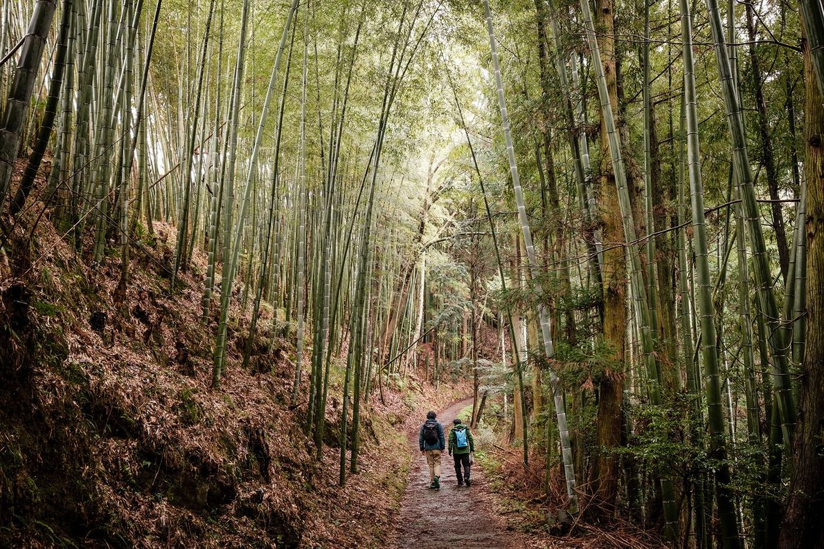Over thousands of years, as pilgrims converged in Kumano, in Wakayama, a blending of spiritual and ...