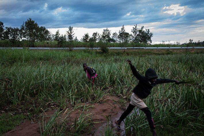 Two girls cut grass in a watery field in Kakamega County, Kenya. Malaria is spread by ...