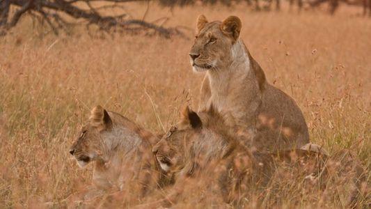 Photography safari: A view to a kill