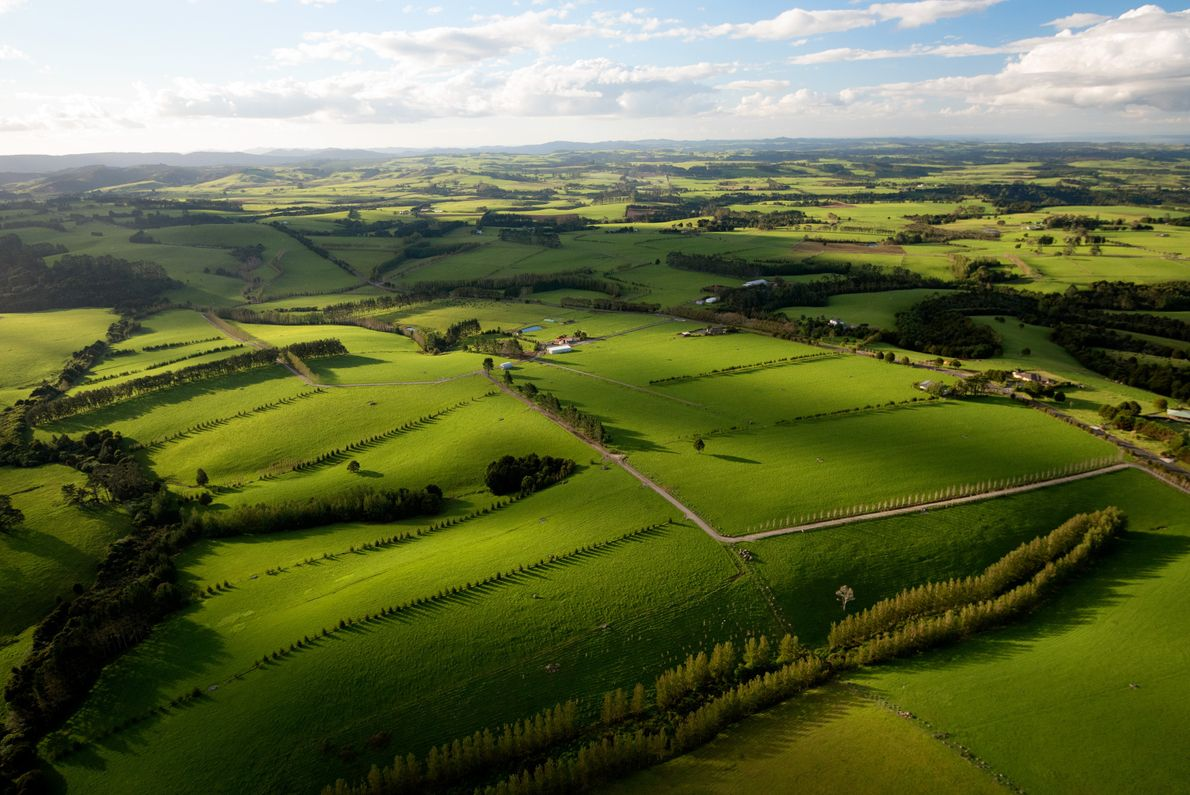 Farmland country near Kerikeri, a town that's home to stunning gardens and New Zealand's oldest building. ...