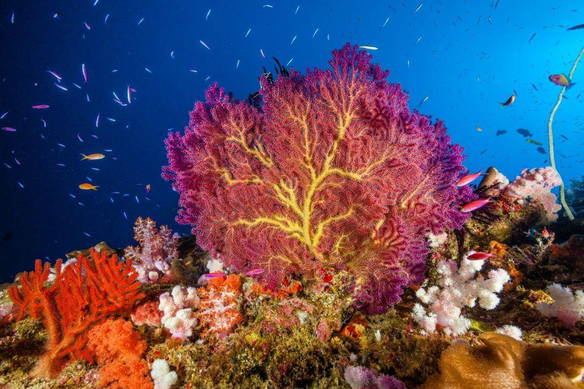 Christmas Island Coral Reef, Australia