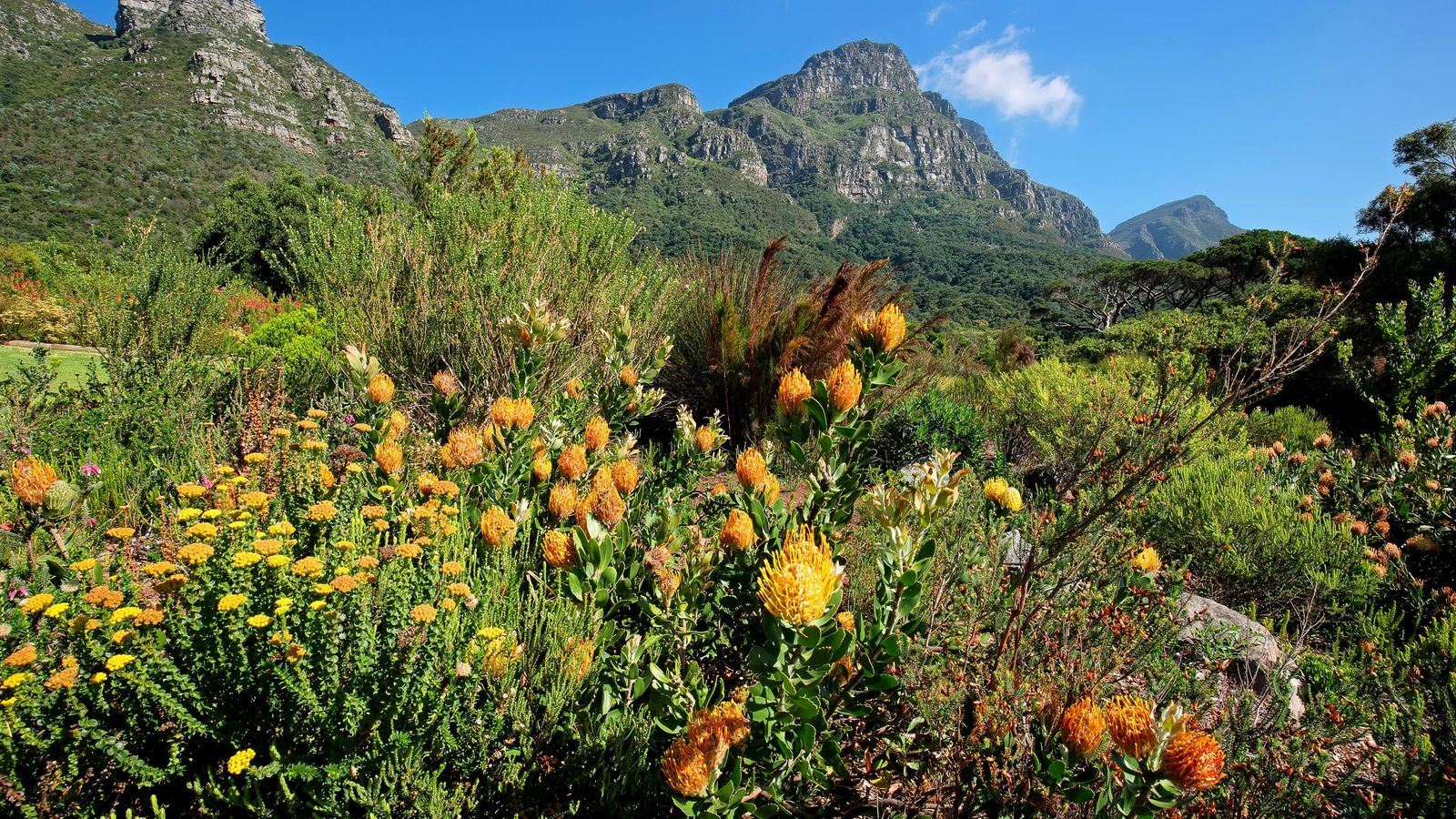 Whether exploring these unique flowers in the wild, or touring the Kirstenbosch botanical gardens, the rare ...