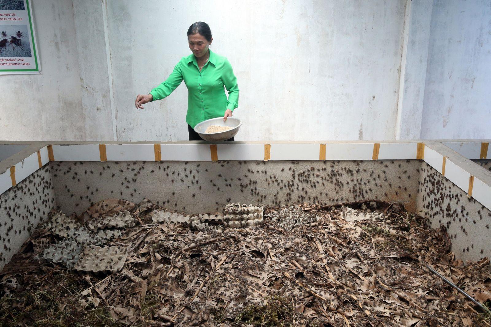 A cricket farm in Dalat, Vietnam.
