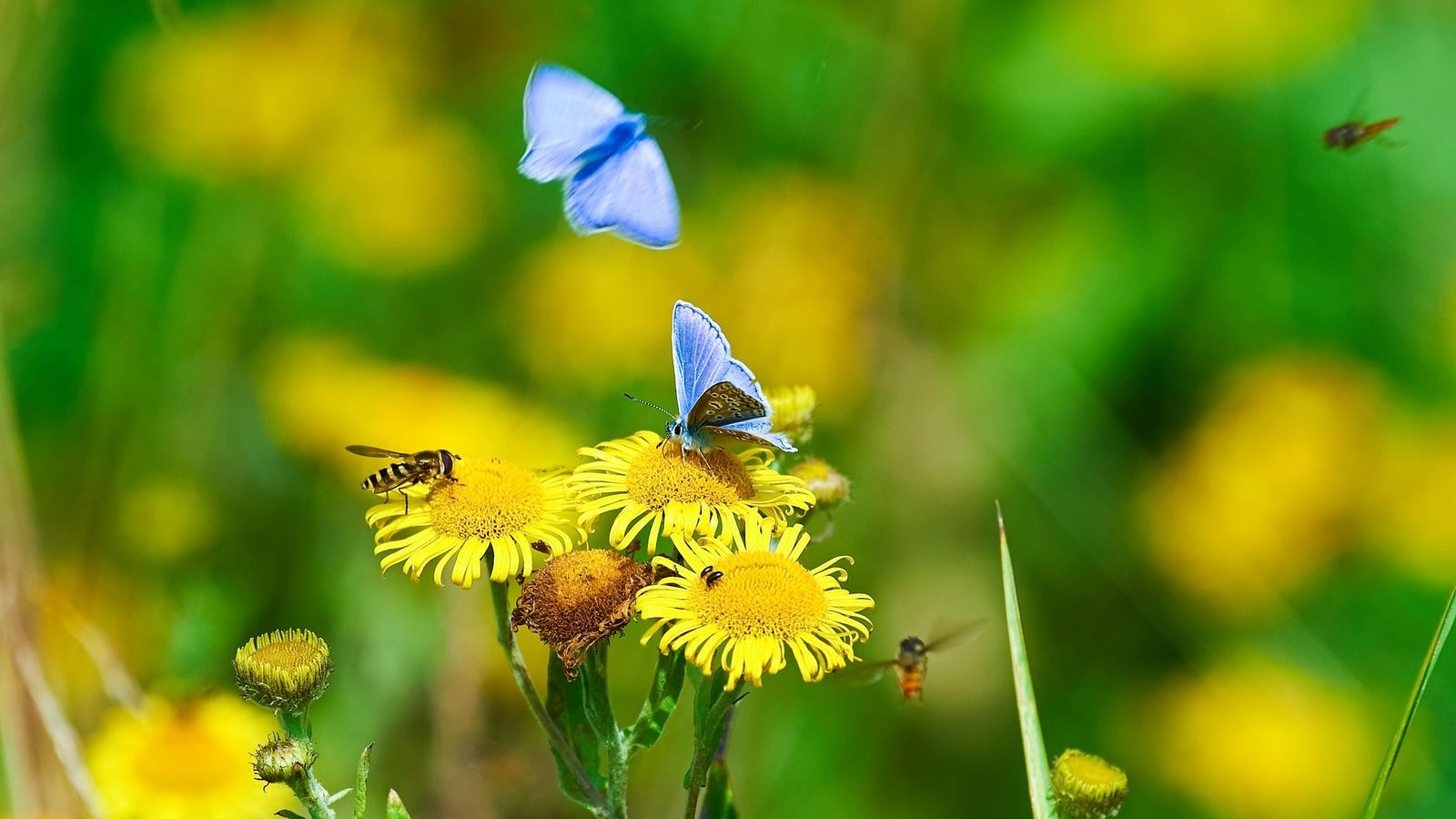 Wildflower meadows are critical breeding grounds for invertebrates including butterflies. Insect populations have long been an ...
