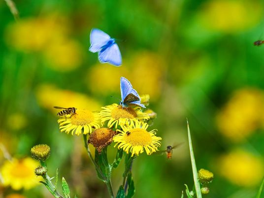 """""""Conservation is no longer enough."""" Why the UK needs to double its space for nature"""