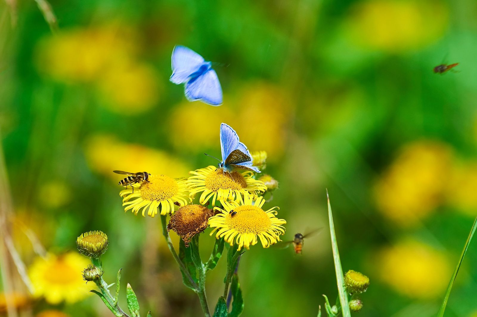 A crisis of biodiversity is facing the planet – and its falling numbers start with invertebrates and ...