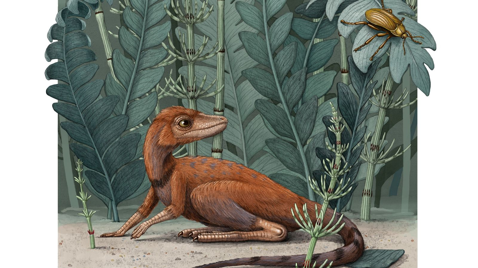 Kongonaphon, about the size of a rat, was a Triassic period reptile that lived in what ...