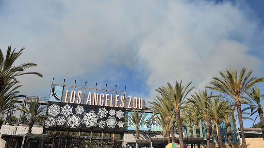 Smoke from a fire in Griffith Park rises over the Los Angeles Zoo, which initiated emergency ...