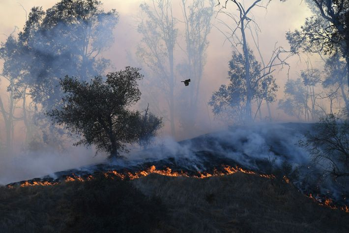 A wildfire in Griffith Park, near the Los Angeles Zoo, began early in the morning on ...