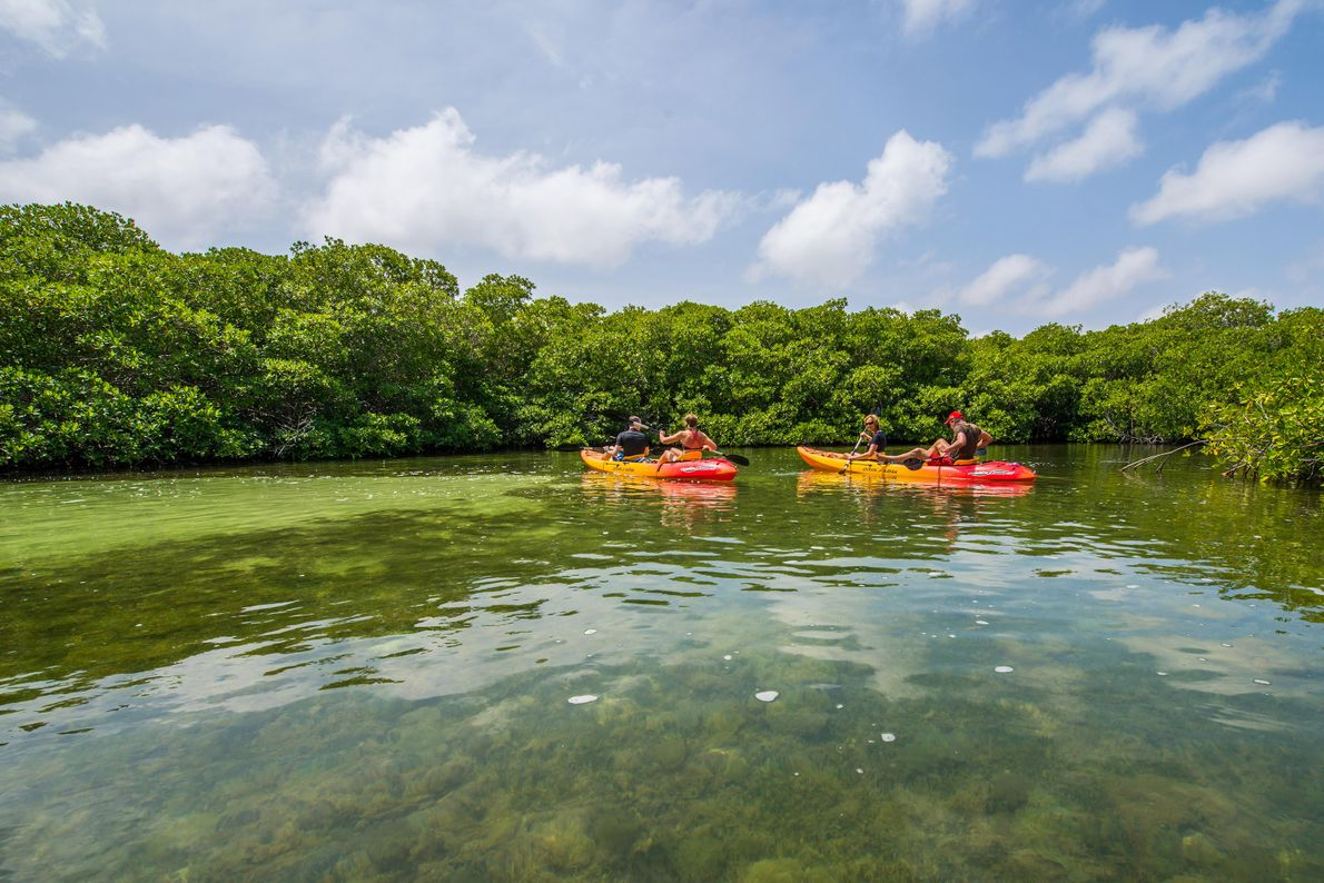 Lac Bay Mangrove Forest