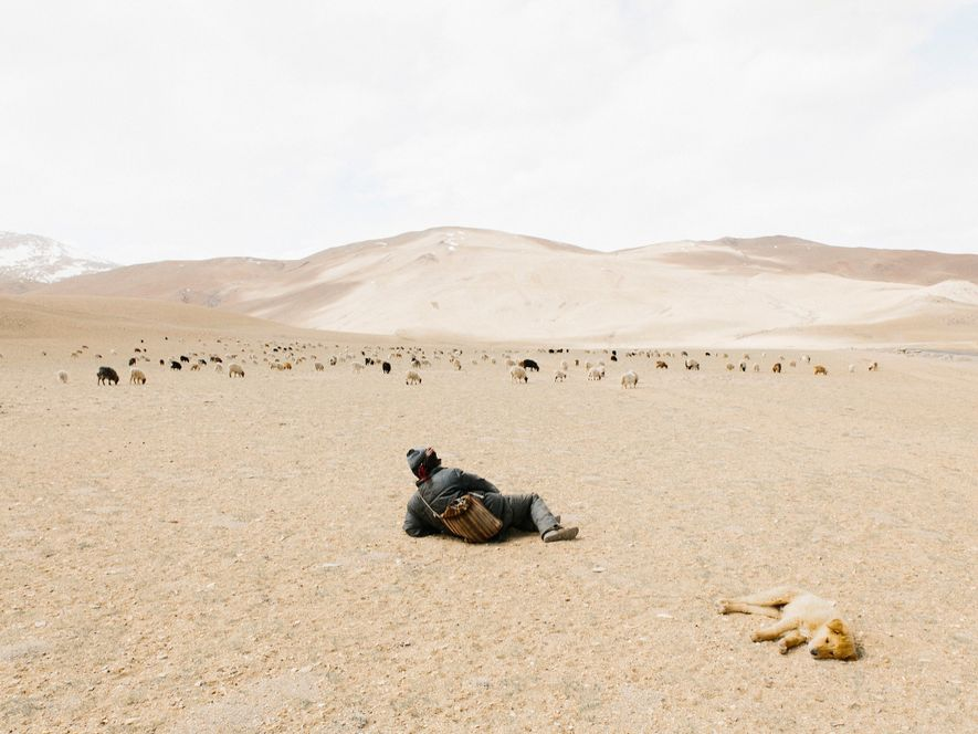 When photographer Yuri Andries finally saw a nomadic shepherd after hours of driving in isolation, he ...