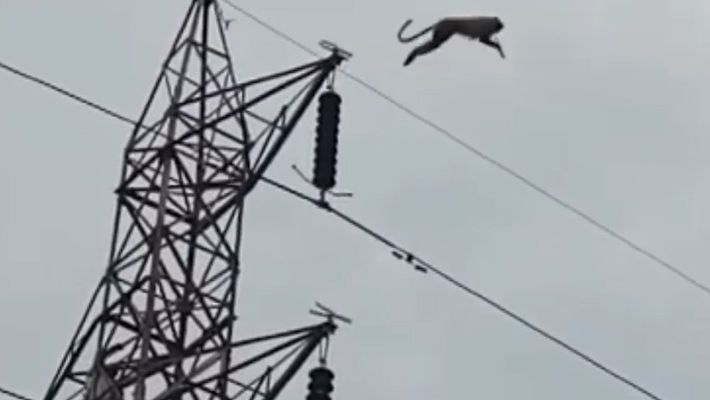 Watch a Monkey Defy Physics in Spectacular Tower Jump