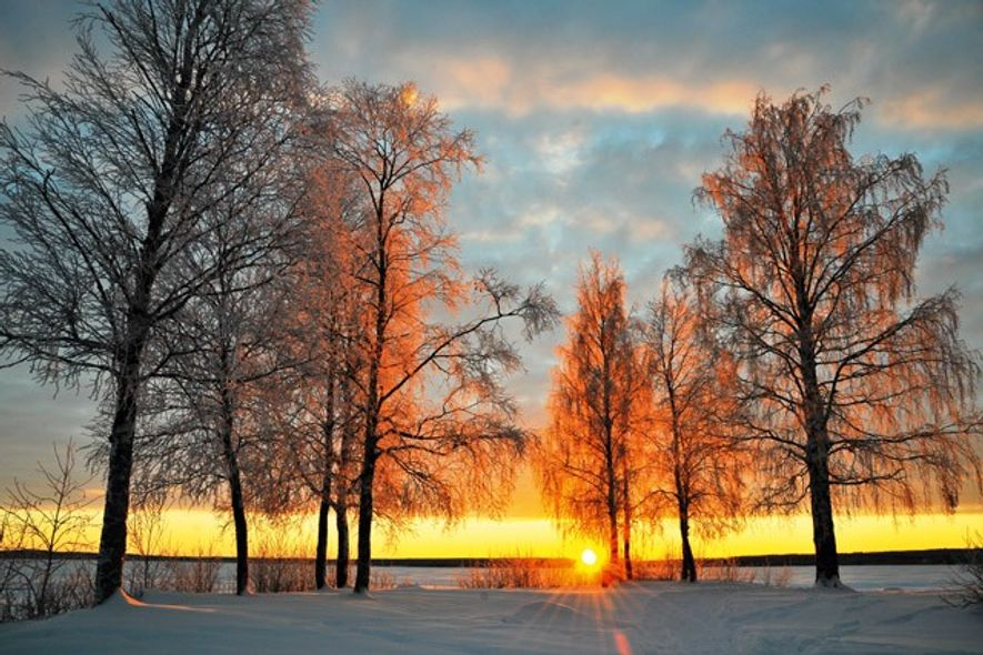 Ice-covered trees by the Luleå River (Luleälven) on a sunny winter day