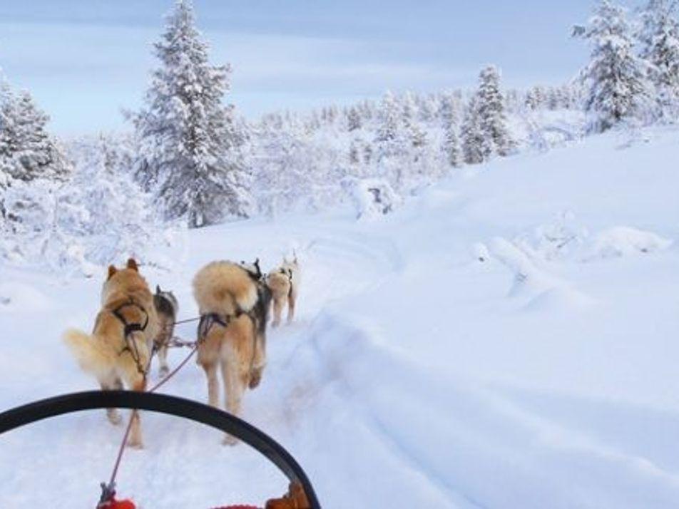 Family travel: Ranua, Finland
