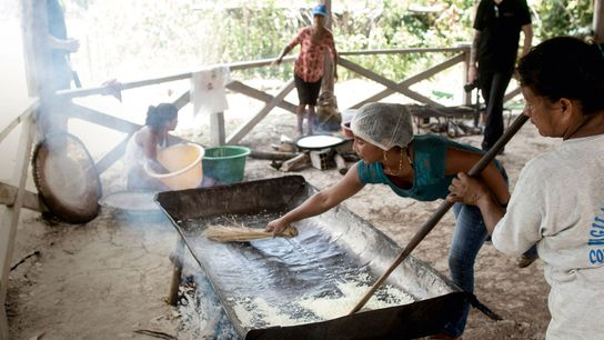 Villagers in Pucaurquillo making tapioca with flour leftover after straining the cassava to make ají negro.
