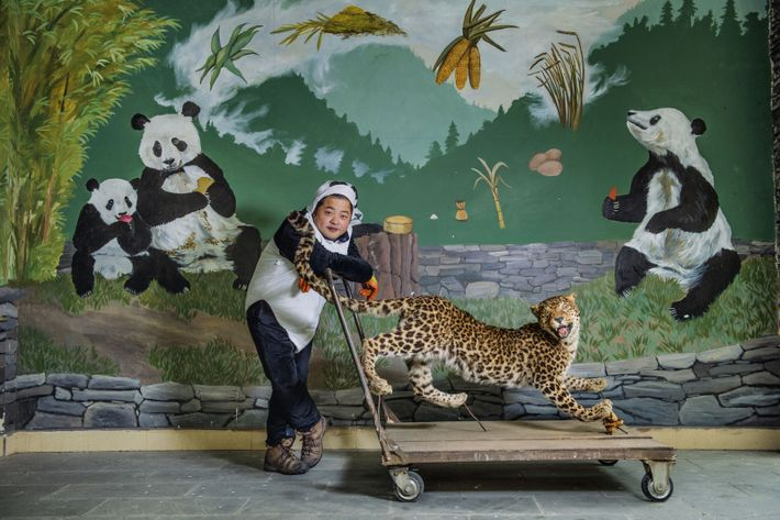 A panda keeper in China uses a stuffed leopard to train young pandas to fear their ...