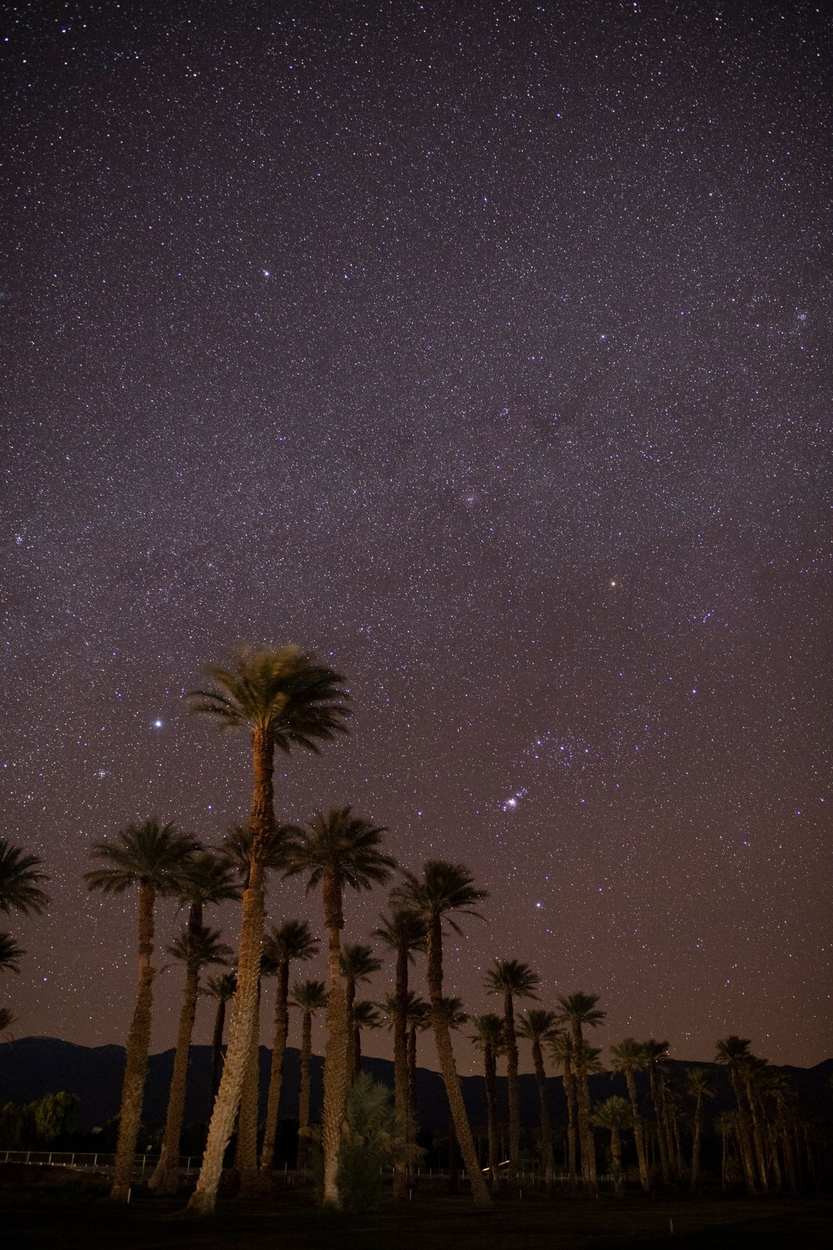 Above the palm trees of Death Valley's Furnace Creek, Sirius, the brightest star in the sky, ...