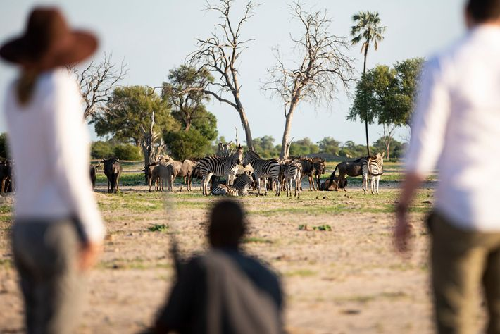 A walking safari at Linkwasha Camp in Hwange National Park, Zimbabwe. As one of the biggest operators, Wilderness Safaris ...