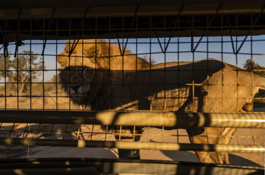 At Lion and Safari Park, in North West Province, tourists are invited to get close and ...