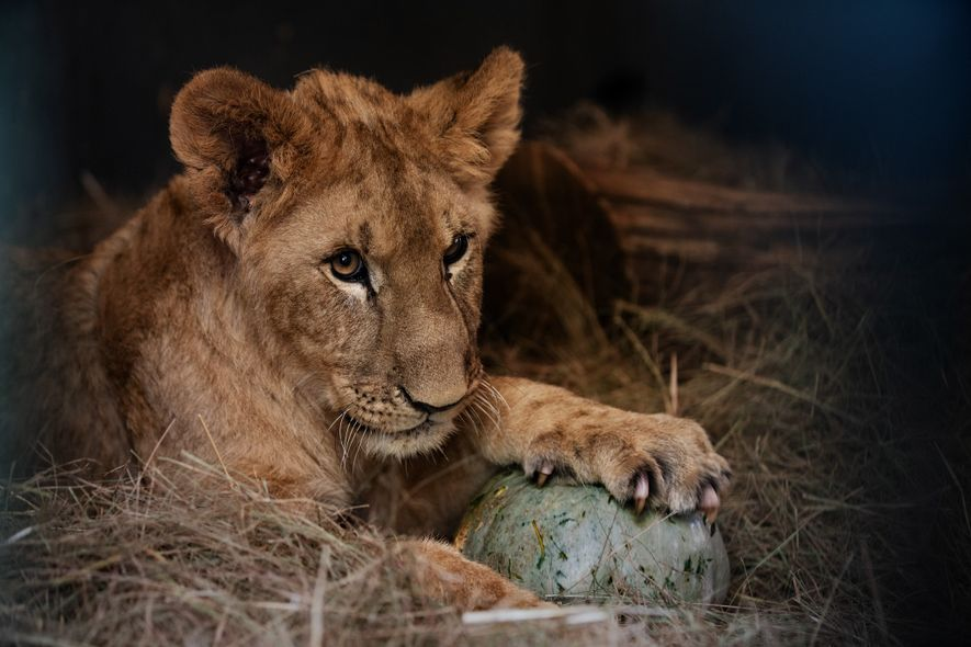 Months of around-the-clock care have helped Karlos, here playing with a gourd, regain his ability to ...