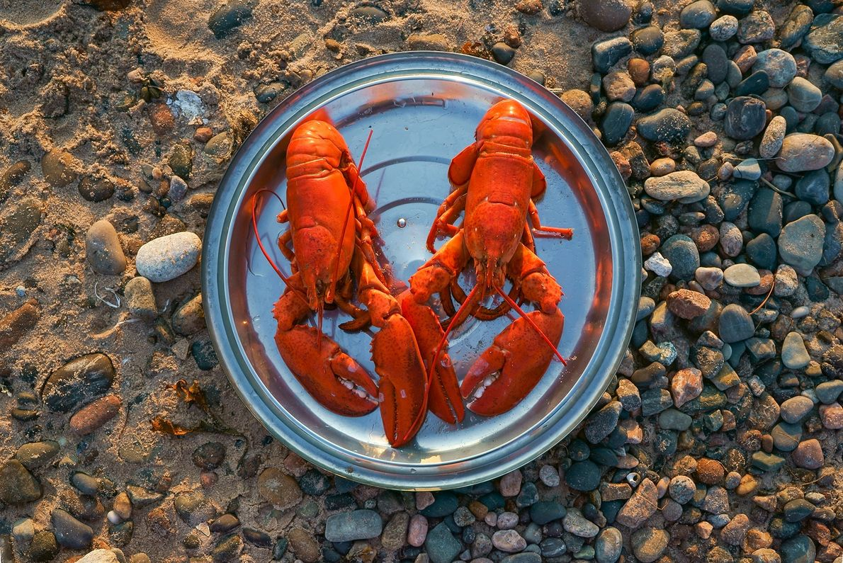 Learn to Lobster Boil takes place Wednesday evenings through August, on Cape Breton Island, near Cheticamp.