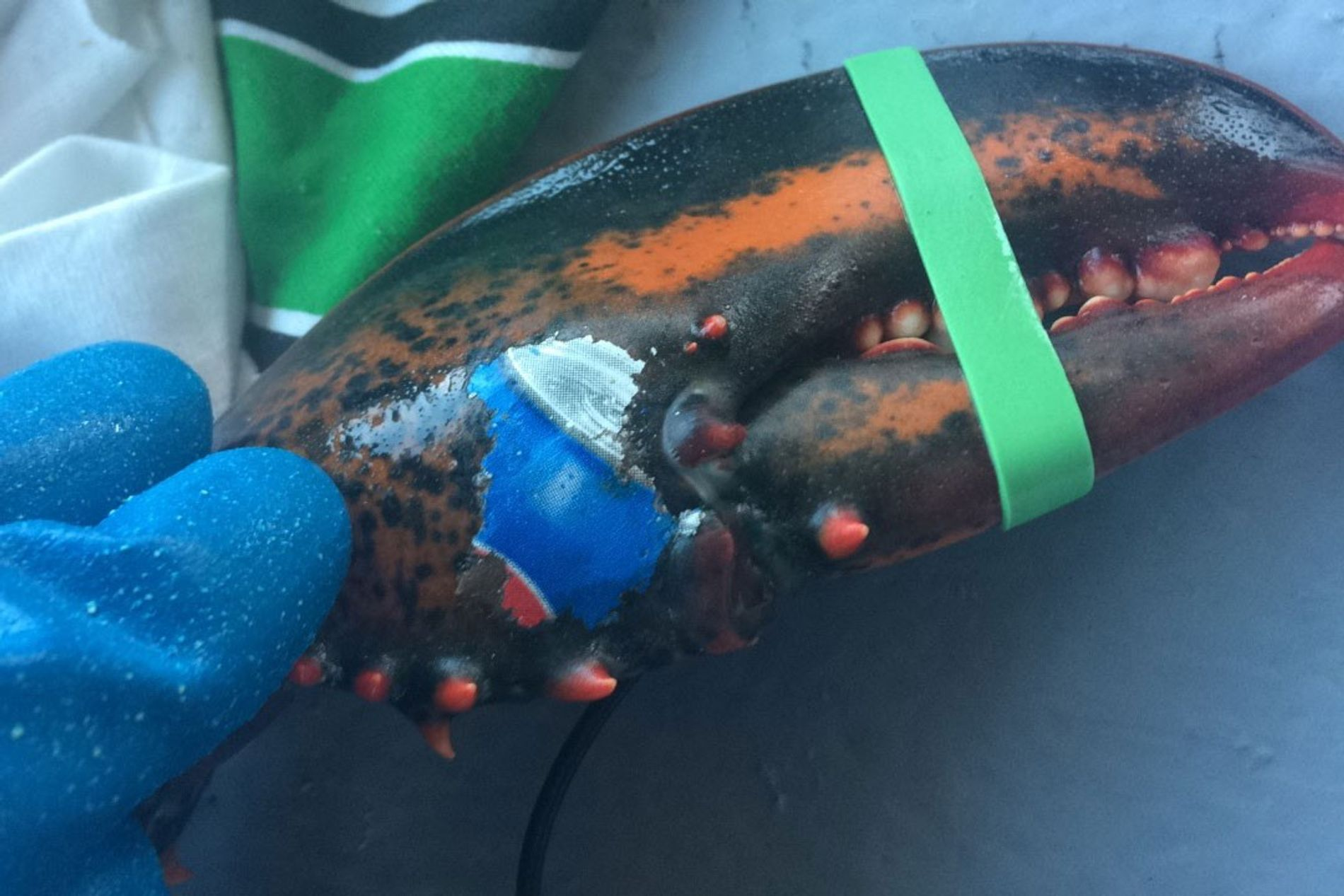 It's unclear how the image was printed onto the lobster's claw.