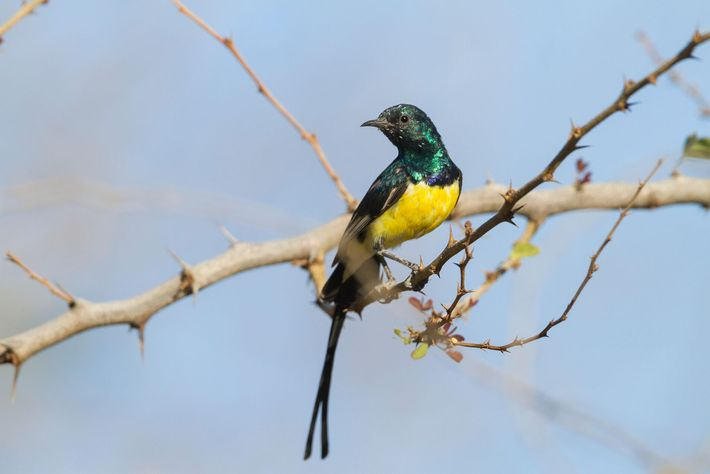 The country's tropical climate and varied habitats attracts a multitude of winged visitors, such as the ...