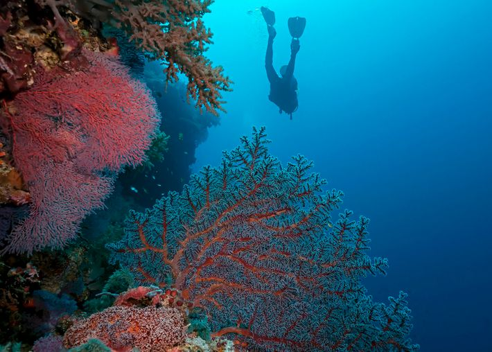 Palawan's Tubbataha Reefs National Park is an excellent spot to float among sea cows, turtles and ...