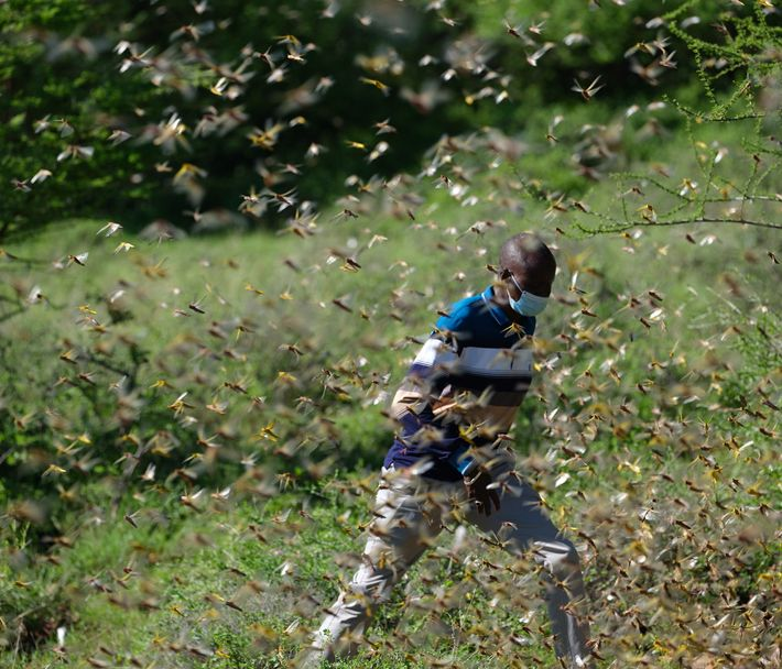 Albert Lemasulani, a Kenyan pastoralist, has voluntarily tracked locust swarms for the Kenyan government and the ...