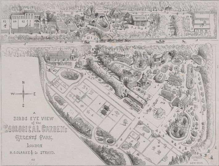 An 1854 survey of the Regent's Park zoo in 1854. First opened for scientific research – ...