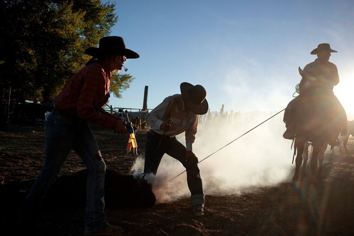 A ranch in Dixie Valley, Nevada, brands their cattle. Cattle ranches are the main industry along ...