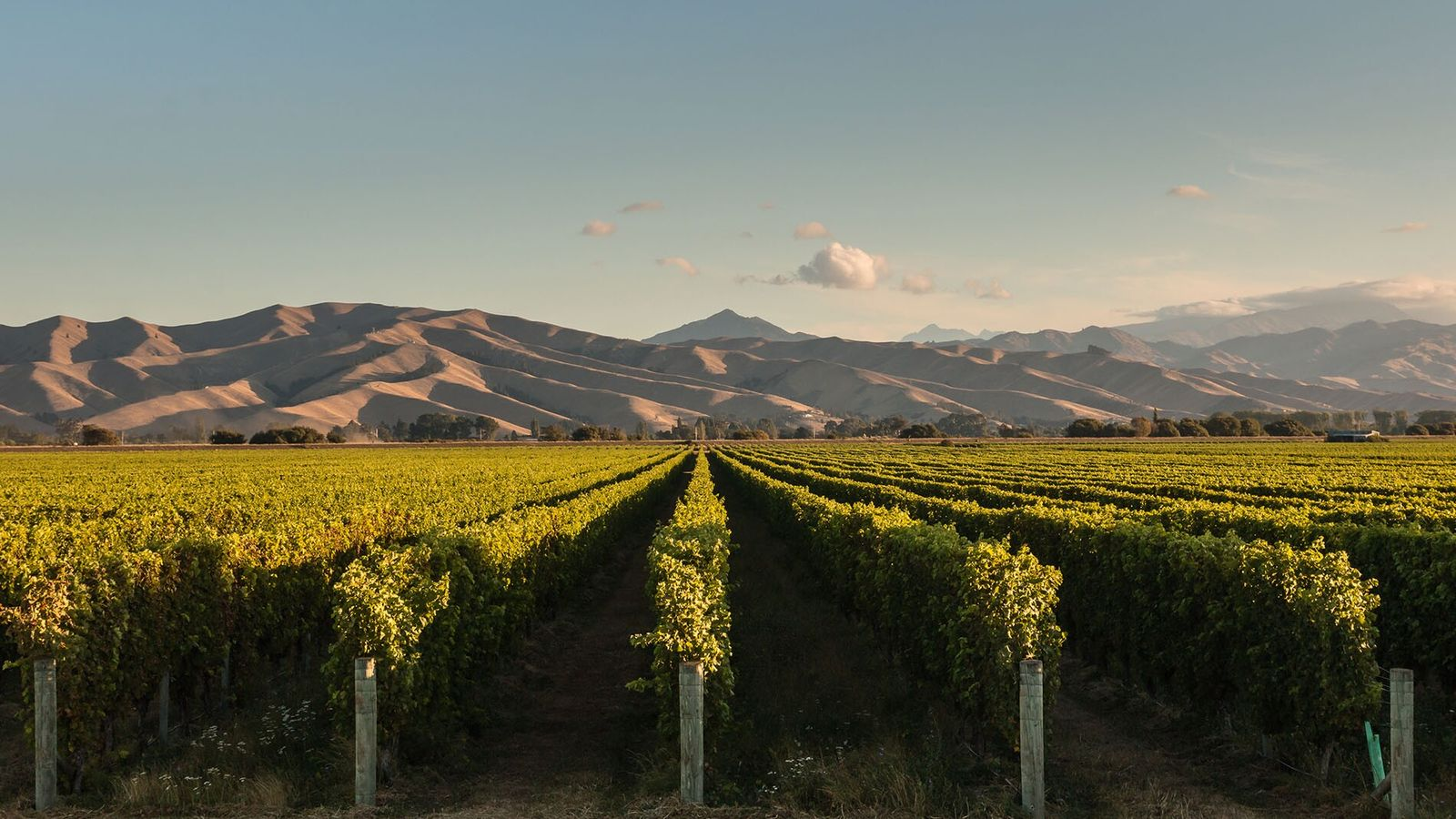 The Marlborough region of New Zealand is home to stunning vineyards and spectacular views.