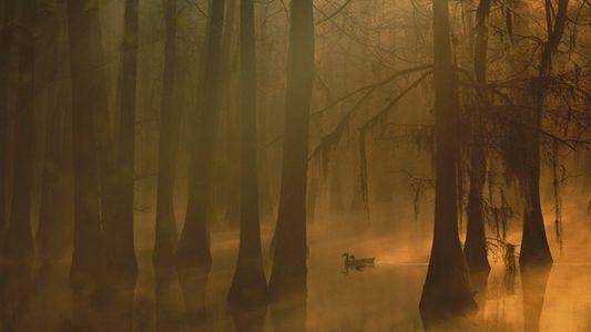 Louisiana: Hoodoo & voodoo, ghosts & graves