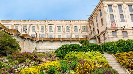 Alcatraz's gardens are flourishing, against all odds