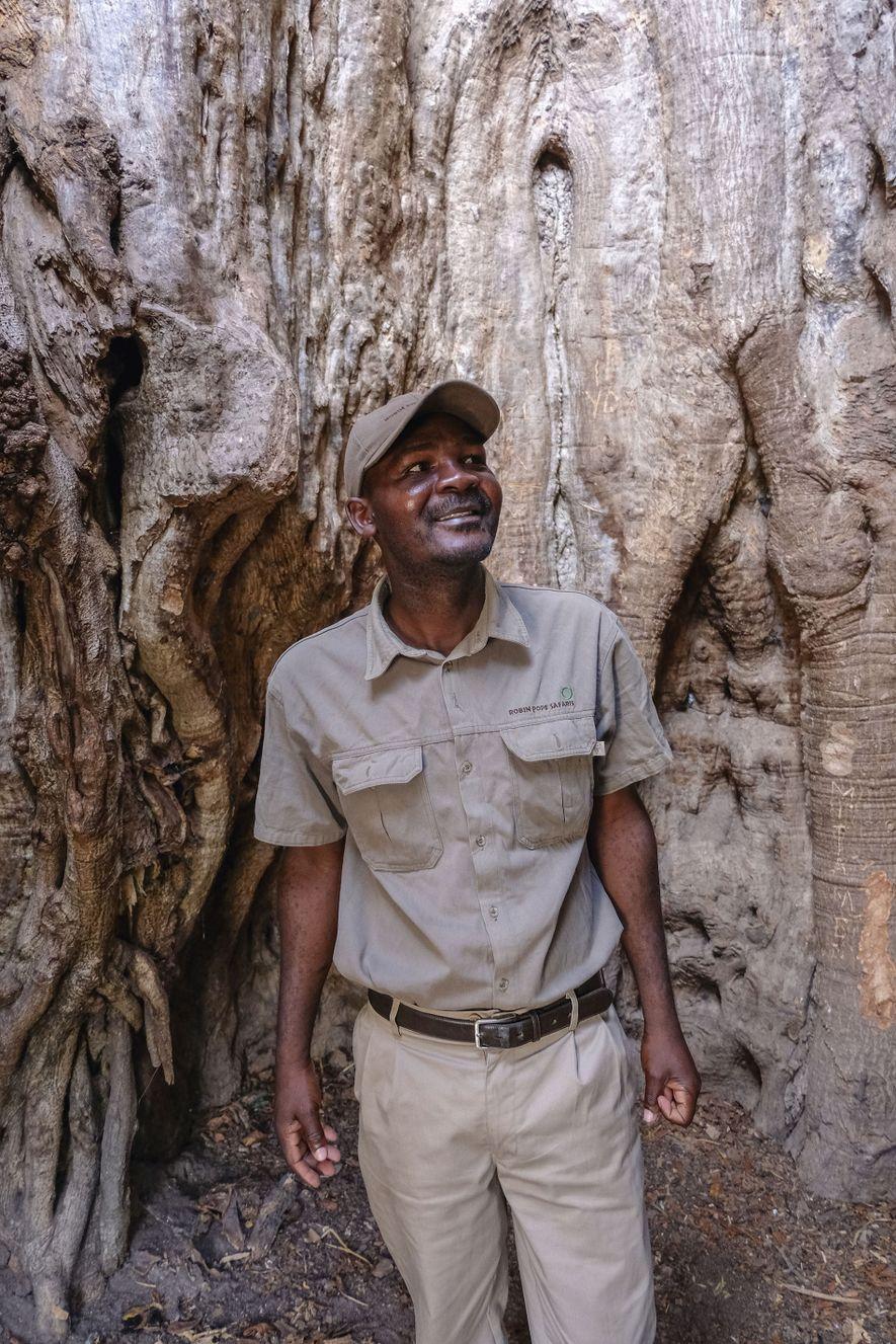 Guide Stanley stands inside Liwonde National Park's oldest baobab