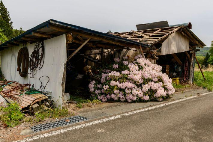 Fukushima-3