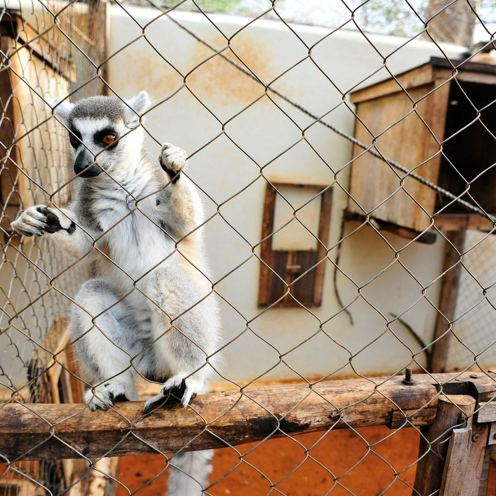 Lemur rehabilitation center Madagascar