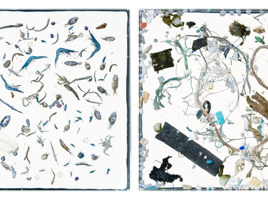 Striking photos reveal plastic and plankton side-by-side