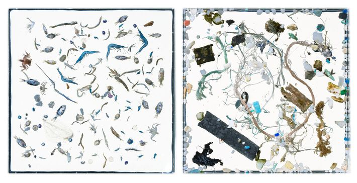 In this pair of images, sea-life (left) and plastic debris (right) are separated into distinct photographs. ...