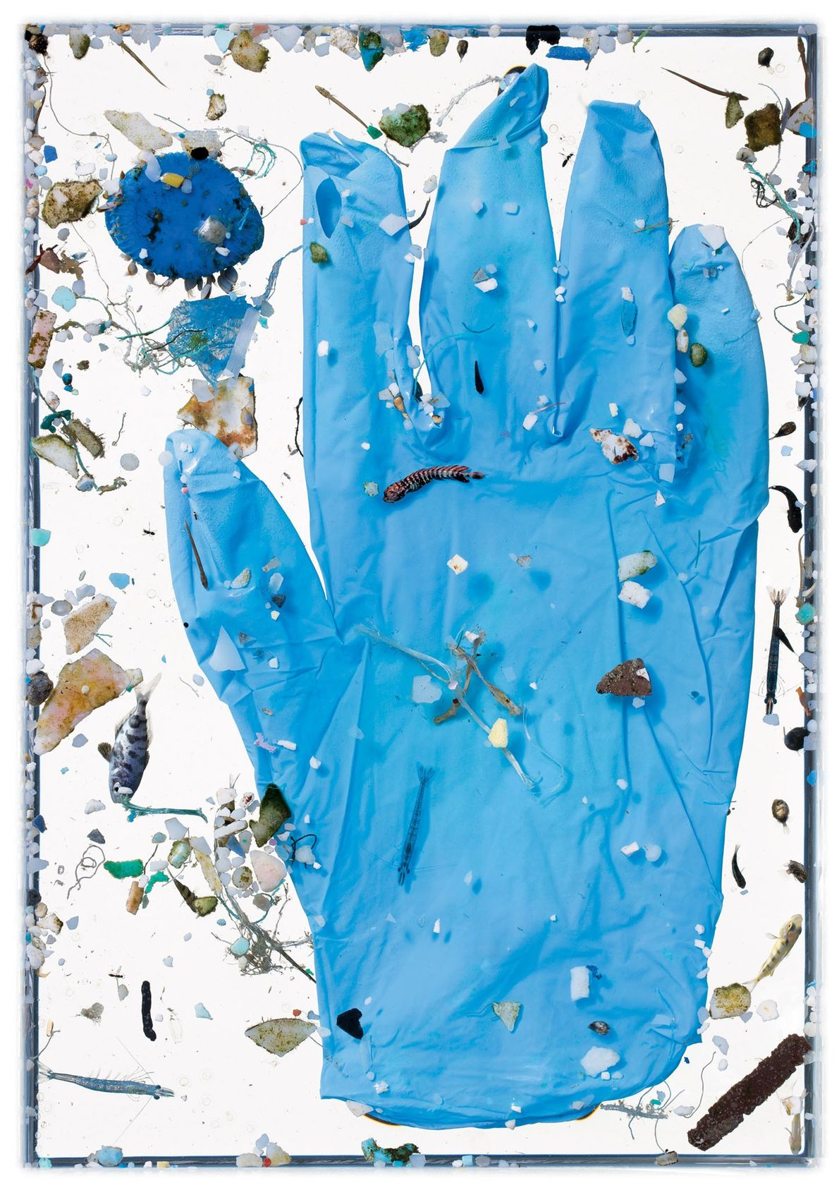 The blue glove hasn't been in the water long enough to suffer the fate of most ...