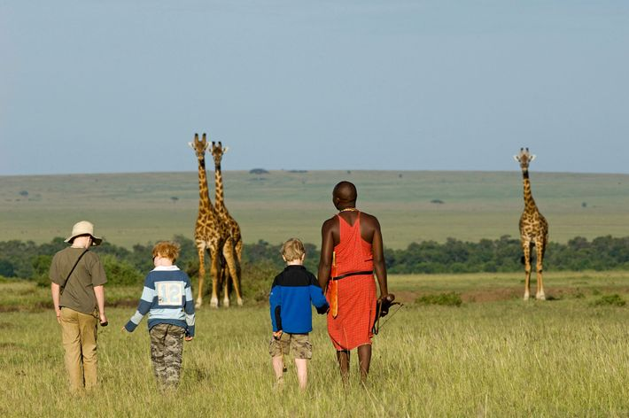 A Maasai guide walks with visiting children near three giraffes in Kenya's Maasai Mara National Reserve. ...