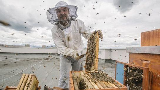 Gorazd Trušnovec, the Slovenian beekeeper