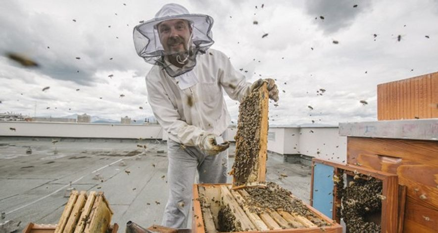 Meet the maker: Gorazd Trušnovec, the Slovenian beekeeper